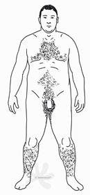 Eine männliche Person mit kräftigem Körperbau und ausgeprägter Behaarung am Bauch, an der Brust und an den Beinen. Auch der Intimbereich ist rund um die Hoden und der Innenseite der Oberschenkel behaart und der Penis hat eine Vorhaut. Die Person hat kurze, sehr dunkle Haare am Kopf.